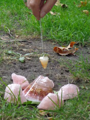 remote dowsing pendulum and shells